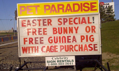 Free bunny or guinea pig with purchase of cage