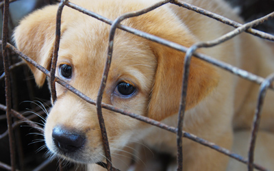 Puppy in cage